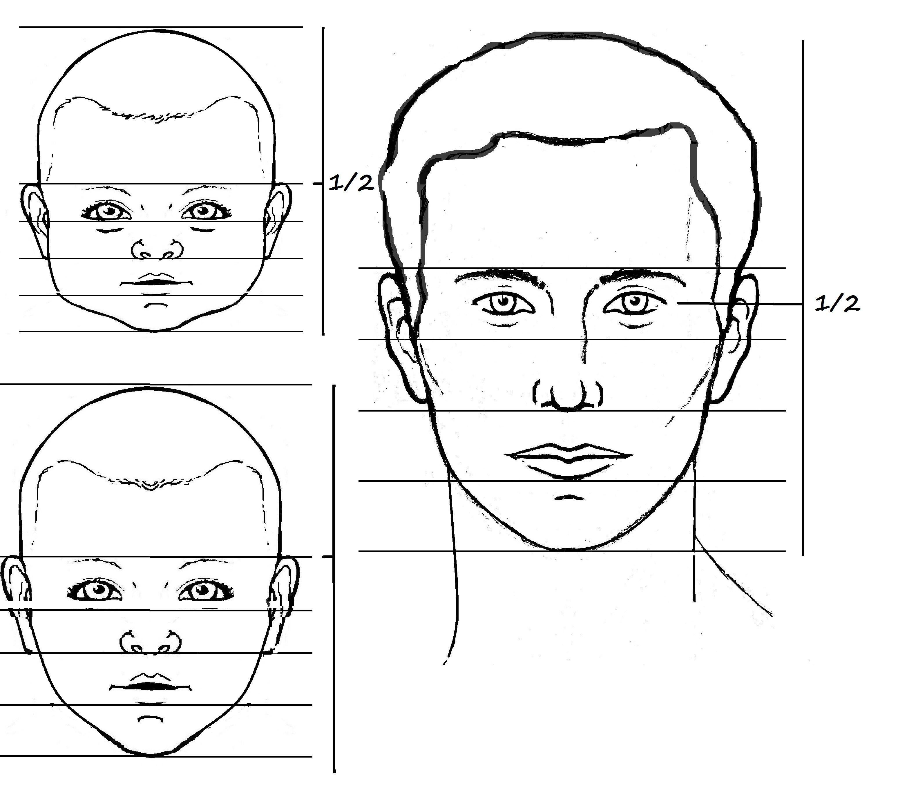 Children S Facial Proportions