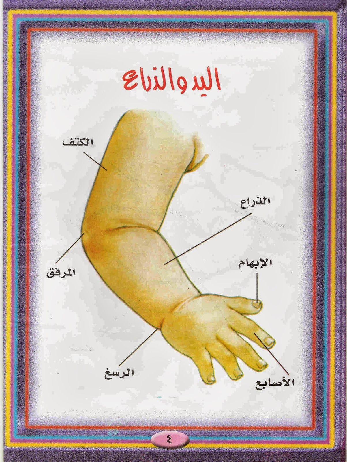 روضة العلم للاطفال اجزاء جسم الانسان Teach Arabic Arabic Lessons Learning Arabic