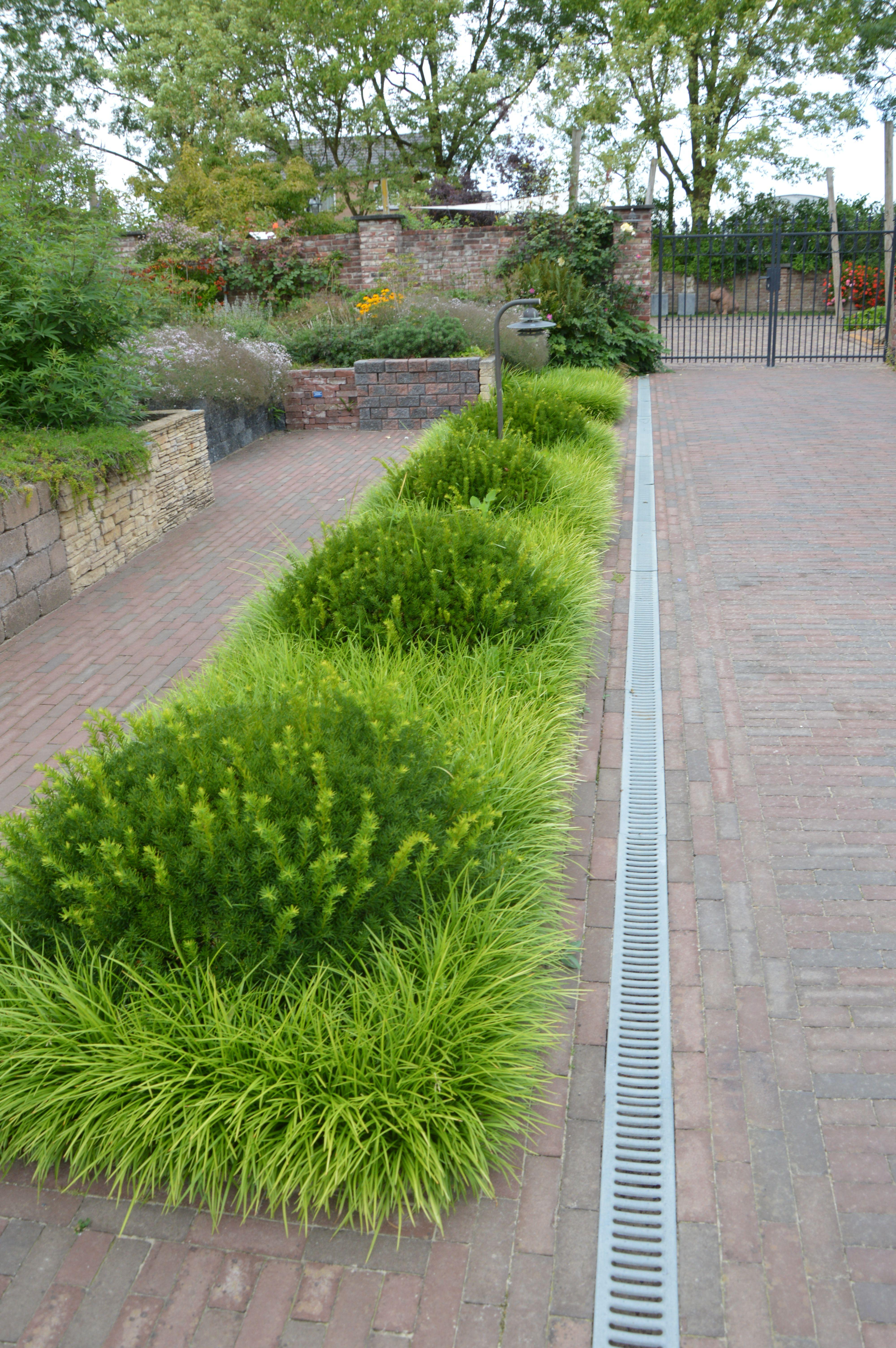 Tuinen van Appeltern - Taxus & Liriope Muscari | Beplanting omgeving ...
