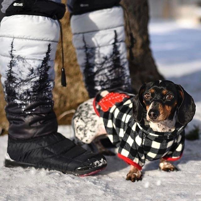 Pin By Julie Dawson On Sausage Puppy Cuddles Wiener Dog
