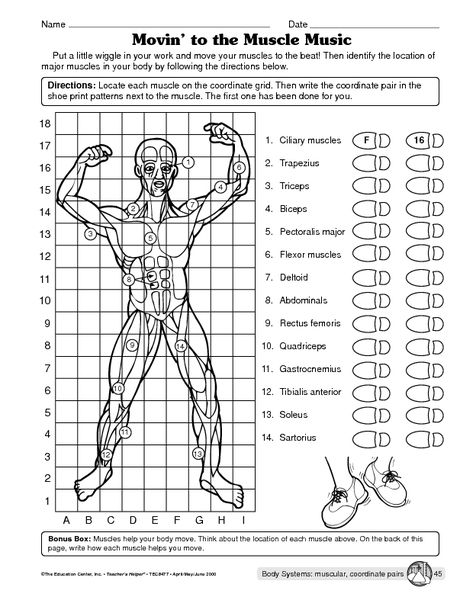 Muscular system worksheet | Science | Pinterest | Muscular system ...