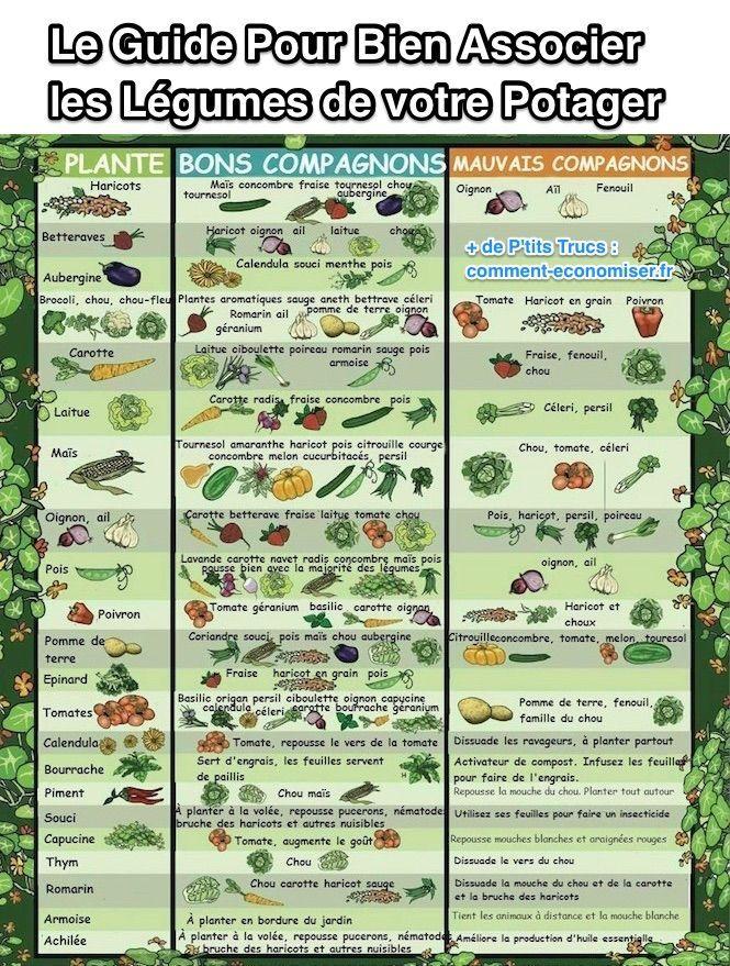 Le guide pratique pour bien associer les l gumes de votre potager jardinag - Guide pratique du potager en carres ...