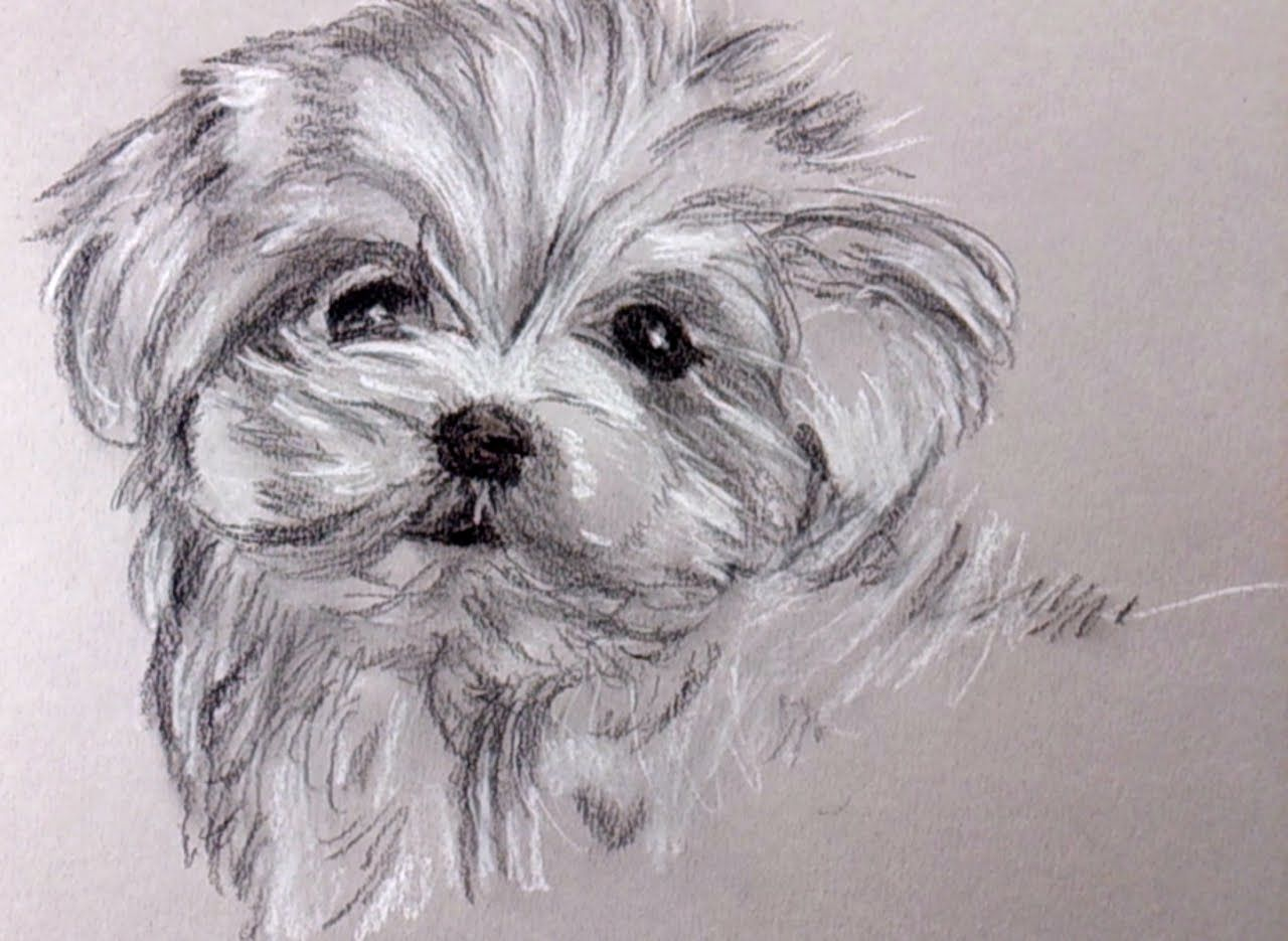 How to draw a puppy with charcoal and carbon pencil