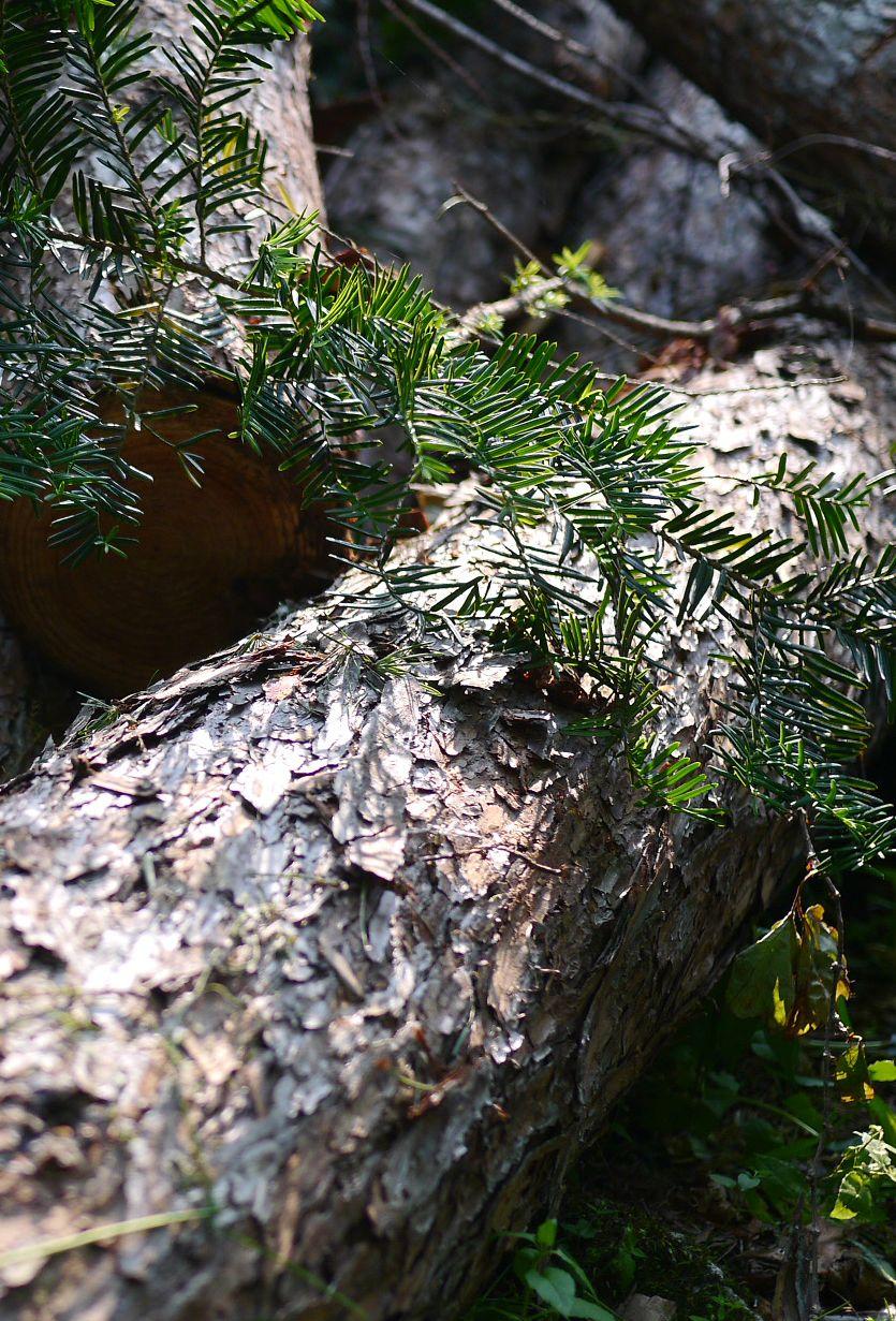 나는 가끔 나무 질감을 찍을 때가 있다.