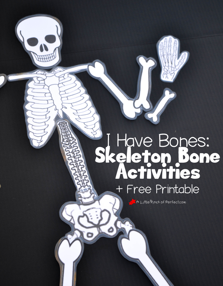 Learning About Bones Activities for Kids and Free Skeleton Printable ...