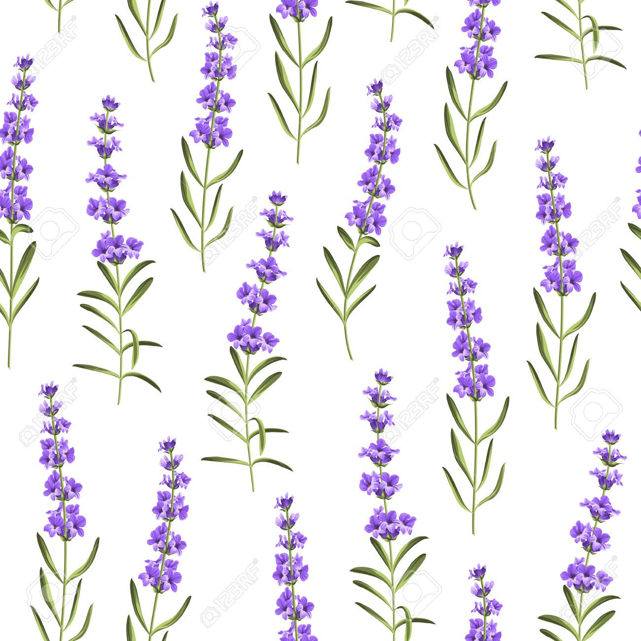 seamless pattern of lavender flowers on a white background