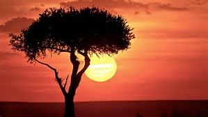 Image Result For Lion King Tree Silhouette Landscape Photography Sky Landscape Sunset Painting