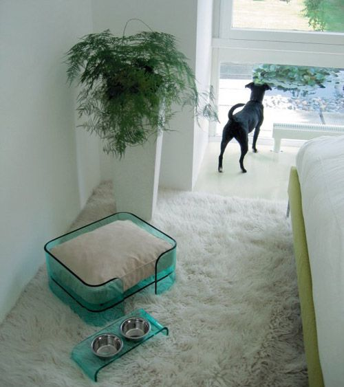 May Is National Pet Month With Images Modern Pet Furniture