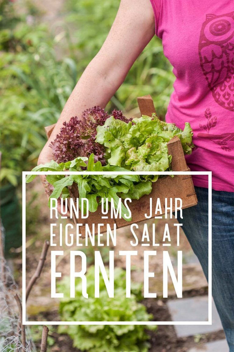 Rund Ums Jahr Eigenen Salat Ernten Erprobter Anbauplan Salat Pflanzen Selbstversorger Garten Garten