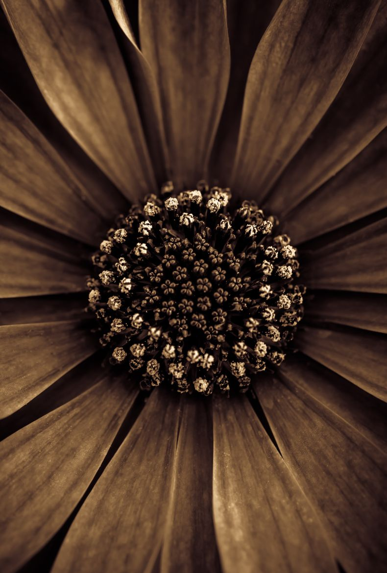 Flower Art Abstract