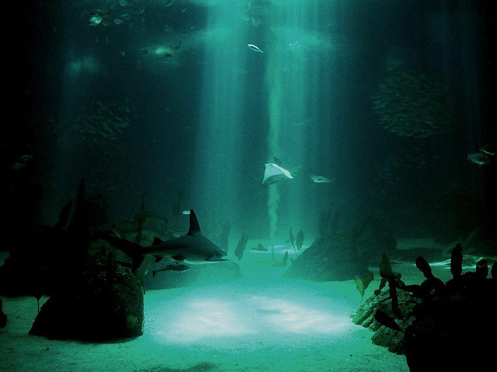 Hd wallpaper underwater - 3d Underwater Desktop Backgrounds Http Backgroundwallpaperpics Com 3d Underwater