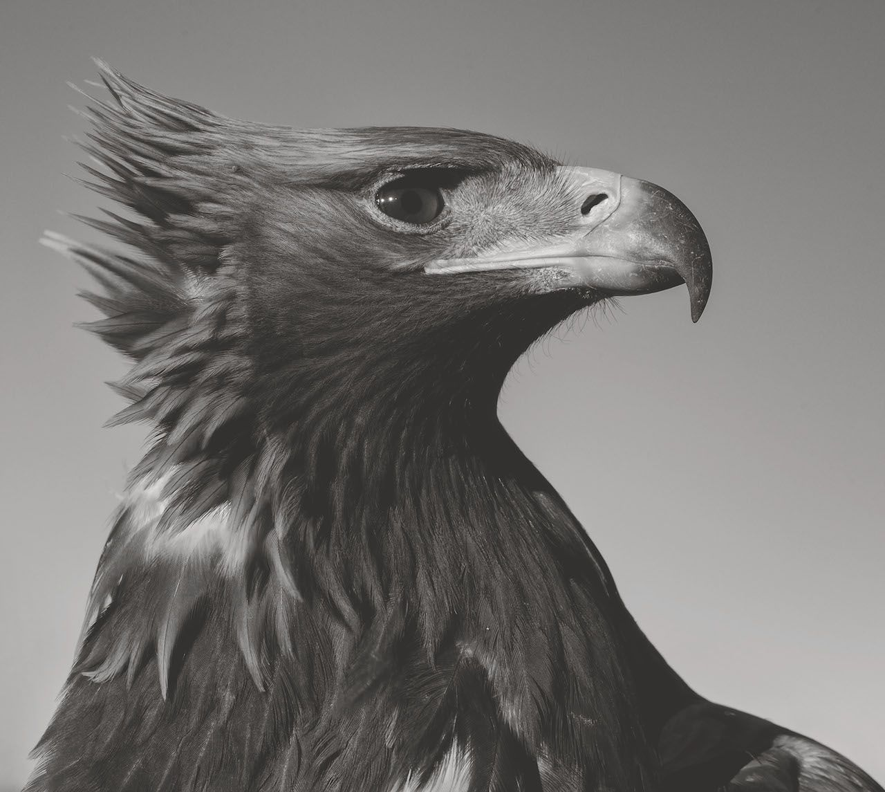 Photo by Palani Mohan from 'Hunting With Eagles: In the Realm of the Mongolian Kazakhs'