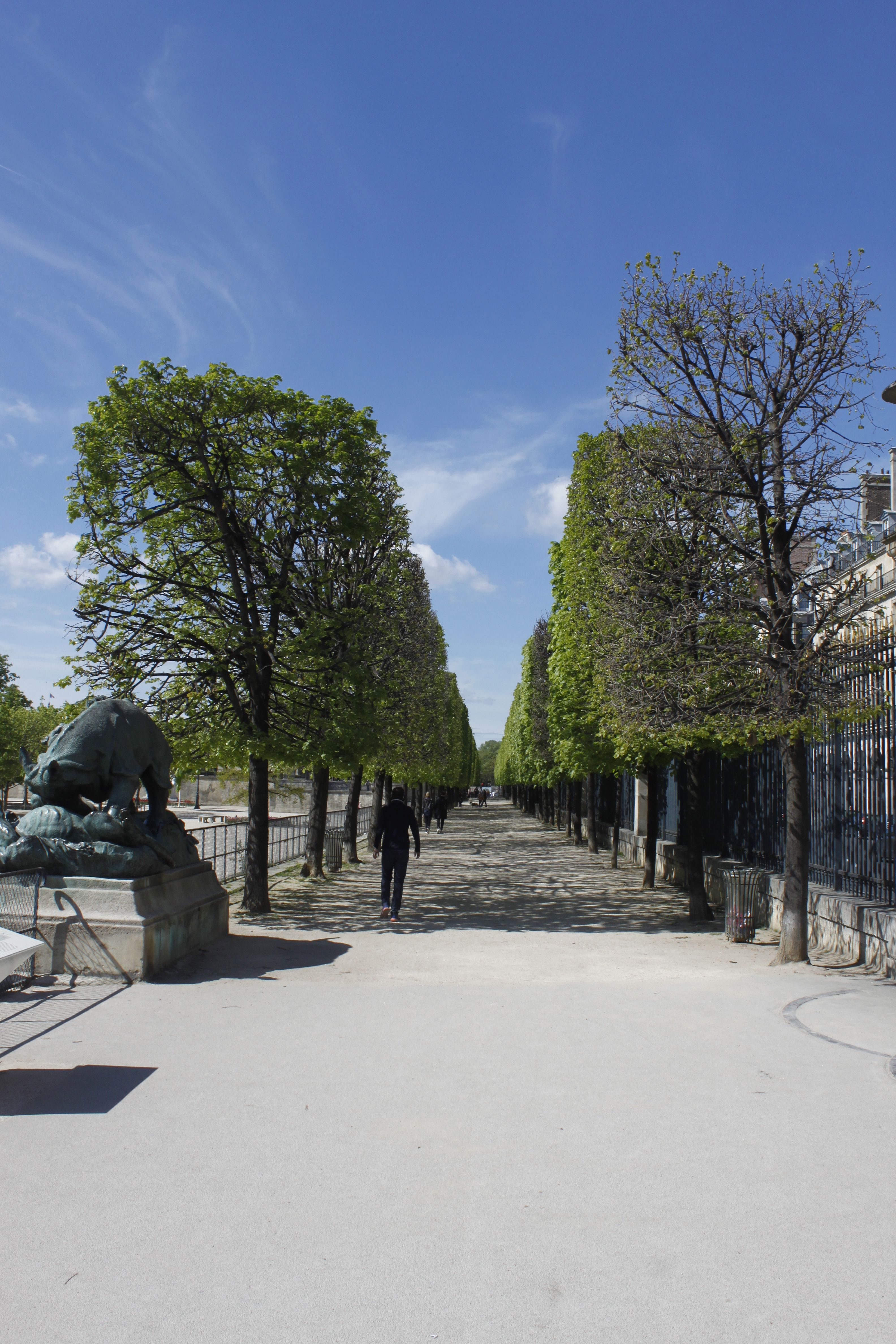 These amazing trees!