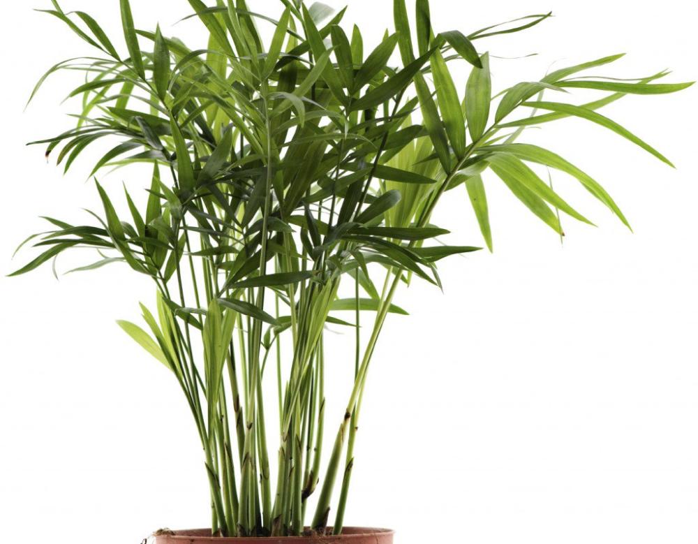 Ces plantes sont des bombes à oxygène et elles purifient lair dans votre maison.