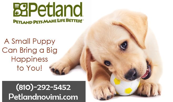 Smart Puppies For Adoption In Michigan Puppy Store Puppy Adoption Small Puppies