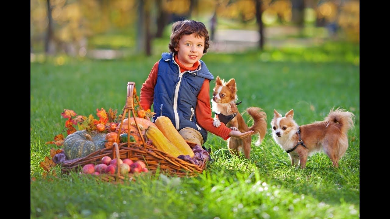 Akron Canton Lawn Care Grub and Lawn Pest Control Dogs