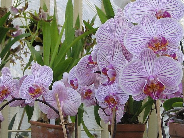 Orchid House Botanic Gardens | Flickr - Photo Sharing!