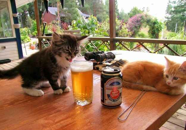 """...""""hey, I might not even finish my beer!"""" this cat thought."""