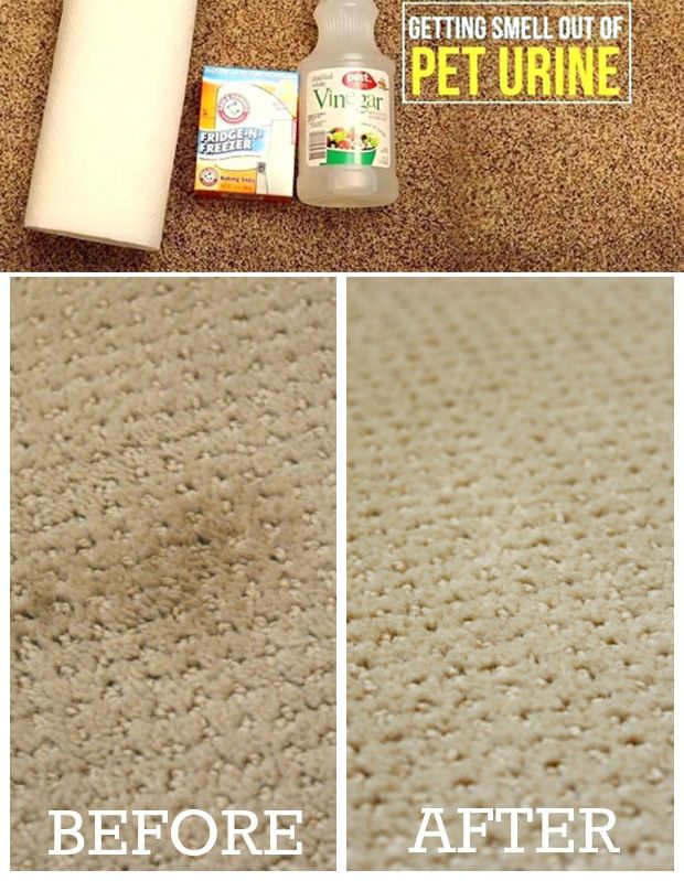 How To Clean Dog Urine From Carpet With Vinegar And Baking Soda E Carpet Stains In 2021 Cleaning Carpet Stains Cleaning Pet Urine Stain Remover Carpet
