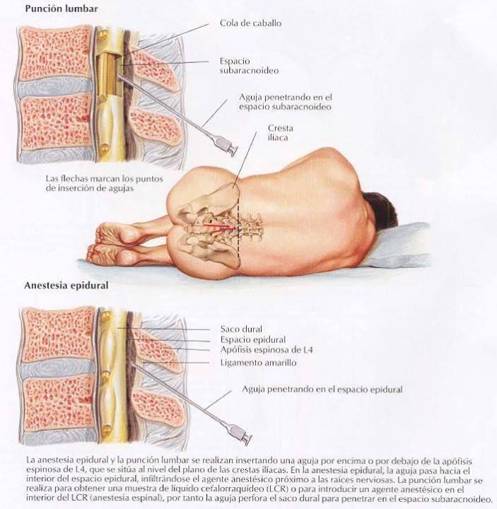 Lujo Los Acontecimientos Actuales En La Anatomía Festooning ...
