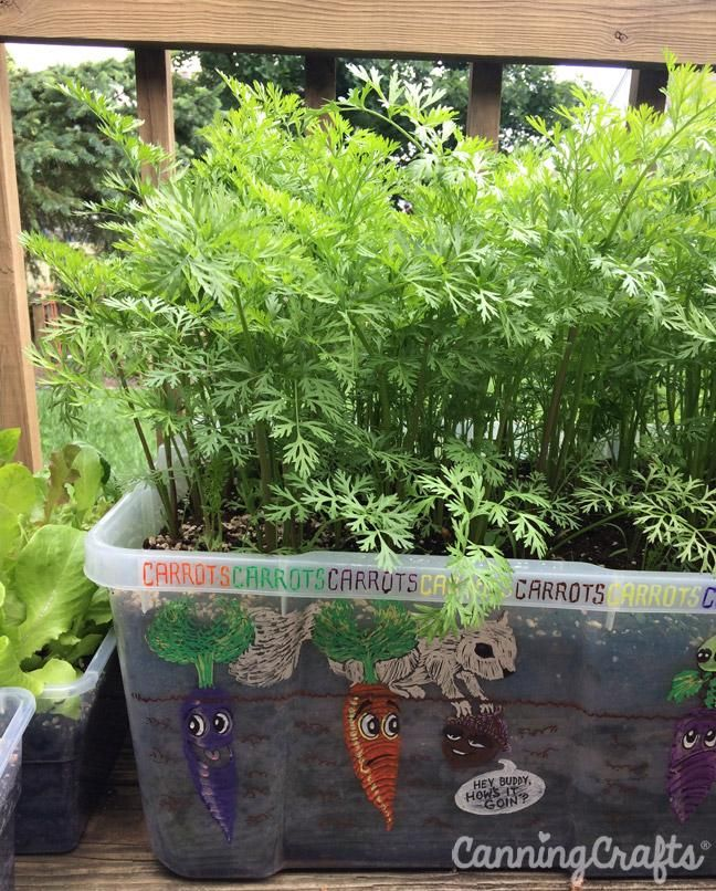 2018 Garden The Great Carrot Container Planting 400 x 300