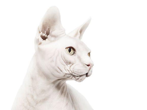 Andrew Zuckerman's animal portraits are eerily human.