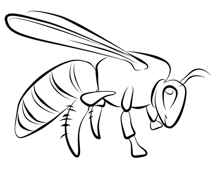 Honey Bee Coloring Pages | Kids Coloring Pages | Pinterest | Bees ...