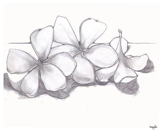 Black And Grey Plumeria Drawing Hawaiian Flower Drawing Plumeria Tattoo Flower Drawing