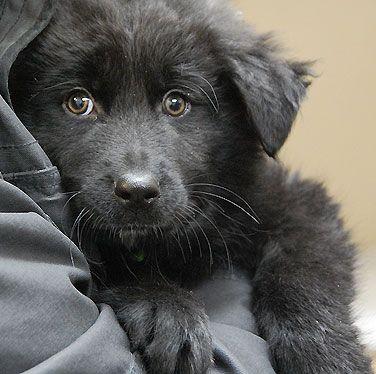 Budgeting For Dog Adoption Dog Adoption Shelter Puppies Dogs