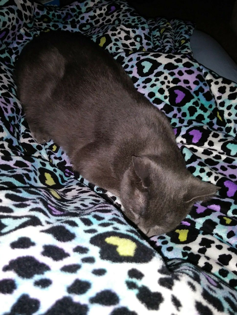 This Is My Cat Princess She Had Two Litters The First Litter She Had Four We Kept The First Baby The Was Born And We Named Him Simba Cat Litter Litter