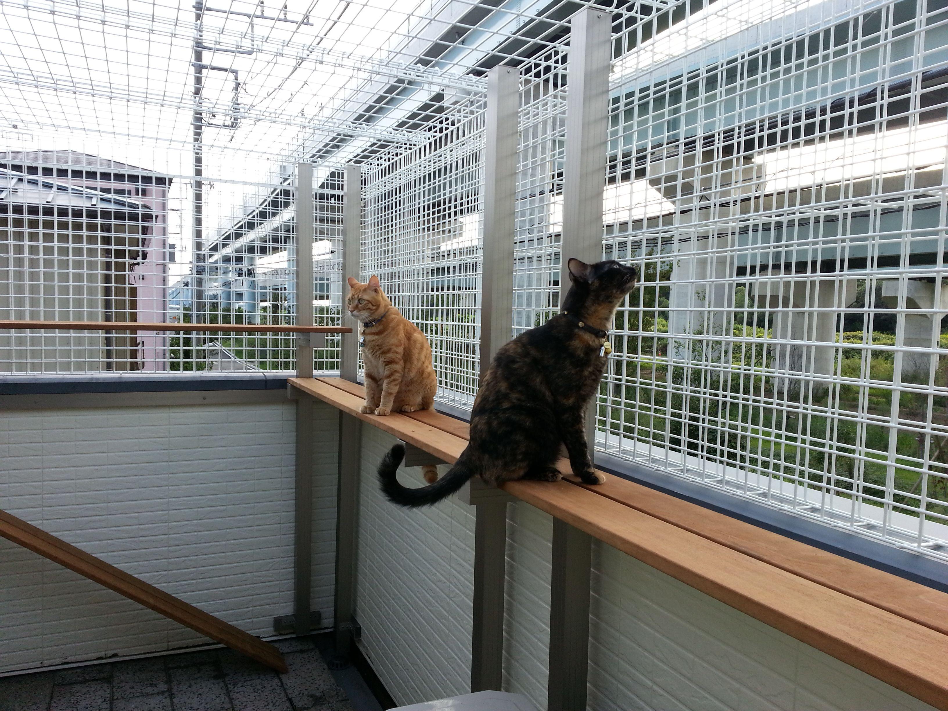 猫の屋外ケージ 猫小屋 猫の遊び場