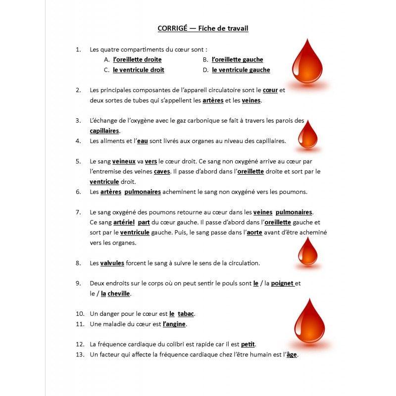 Systeme Circulatoire Jeu De Societe Systeme Circulatoire Systeme D Jeux De Societe