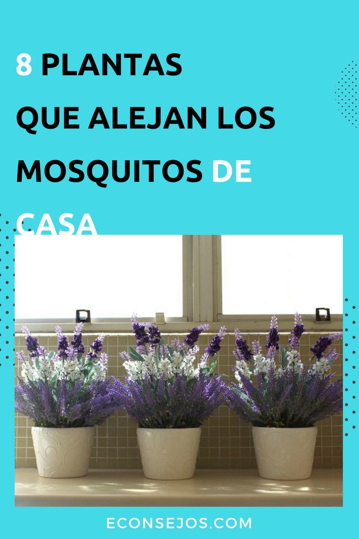 14 Plantas antimosquitos que ahuyentan los insectos de tu hogar