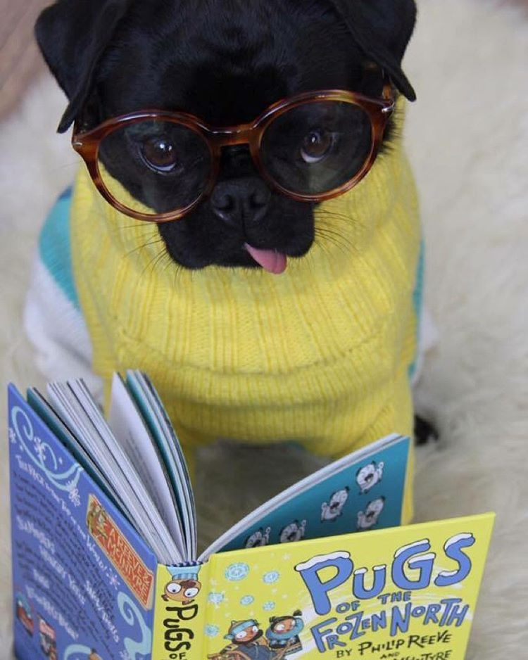 Can T Talk Reading Pugs Of The Frozen North Children S
