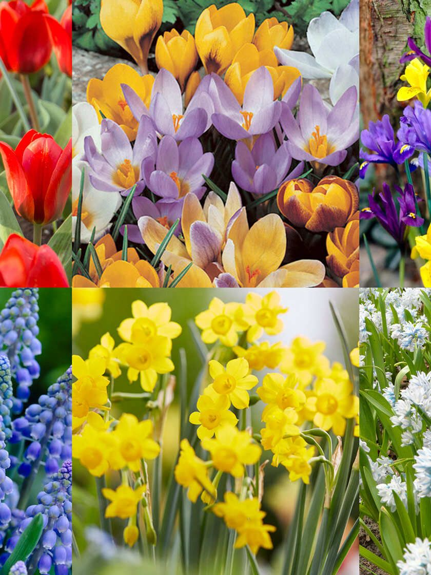 Wild Flower Bulb Mix Set Of 100 Gardener S Supply In 2020 Bulb Flowers Flowers Perennials Flowers