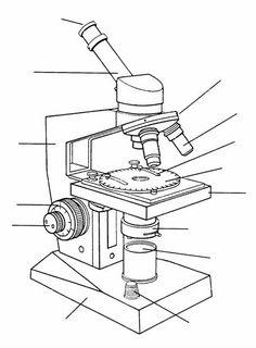 Microscopio Compuesto Y Sus Partes Busqueda De Google Microscopio Optico Imagenes De Microscopio Microscopio