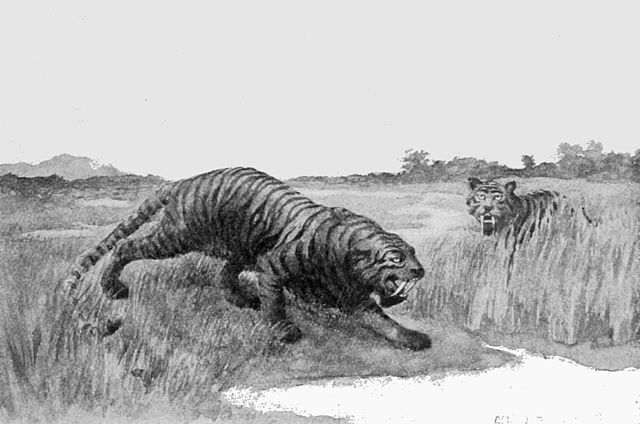 Unexpectedly Awesome Facts About Saber-toothed Tigers   Cats ...