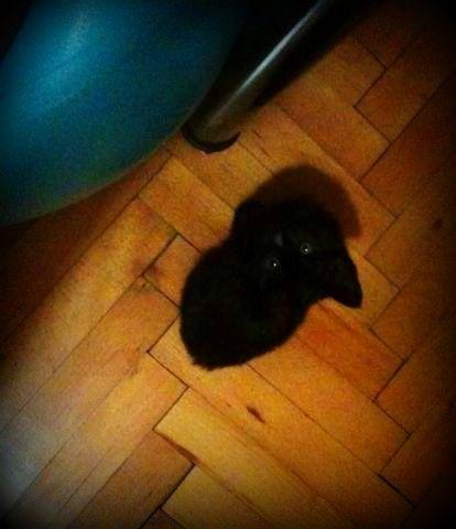 yol kenarında bulduğum kara böcük