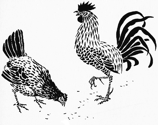 Line Art Rooster : Drawing of chickens scratching in search food needlework