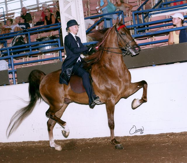Images Of Saddlebreds Rocky Start Pleasure Pleasure Eq By A Double Bred Ch Valley View Breeds Animals Valley View
