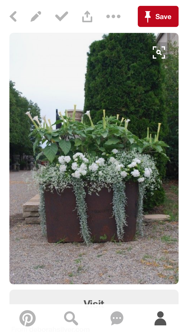 Pin By Biuro Rachunkowe Dorota Kania On Outside Container Plants Garden Containers Plants