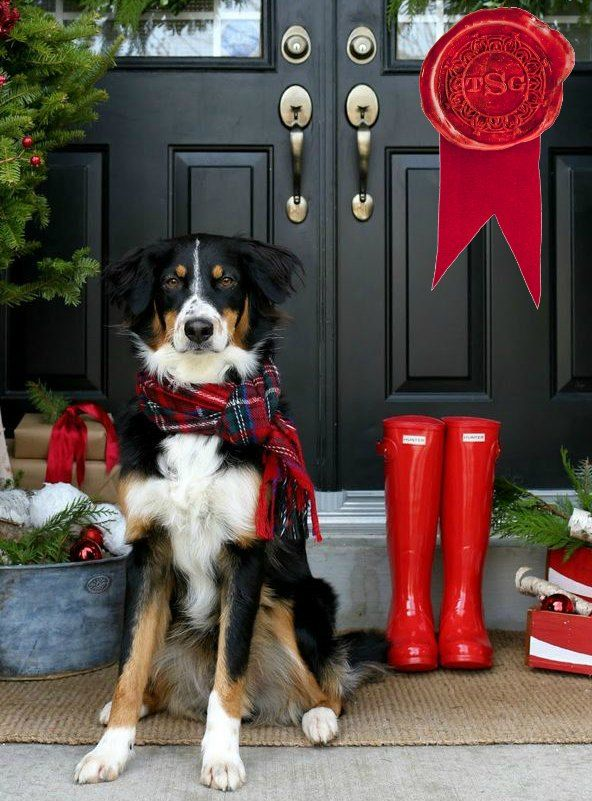Tips for easing the holiday strain on your pets! Article from: TSG ...