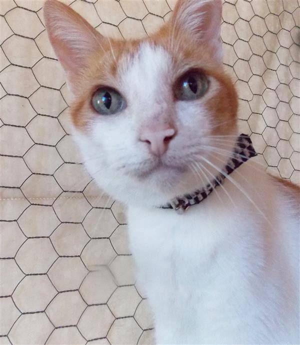 Não Gosta de Gatos? Olha a minha cara de preocupação!