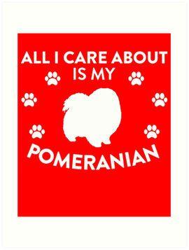 My Pomeranian
