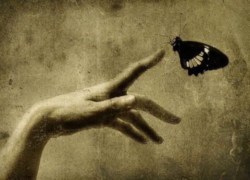 """Résultat de recherche d'images pour """"masao yamamoto main papillon"""""""
