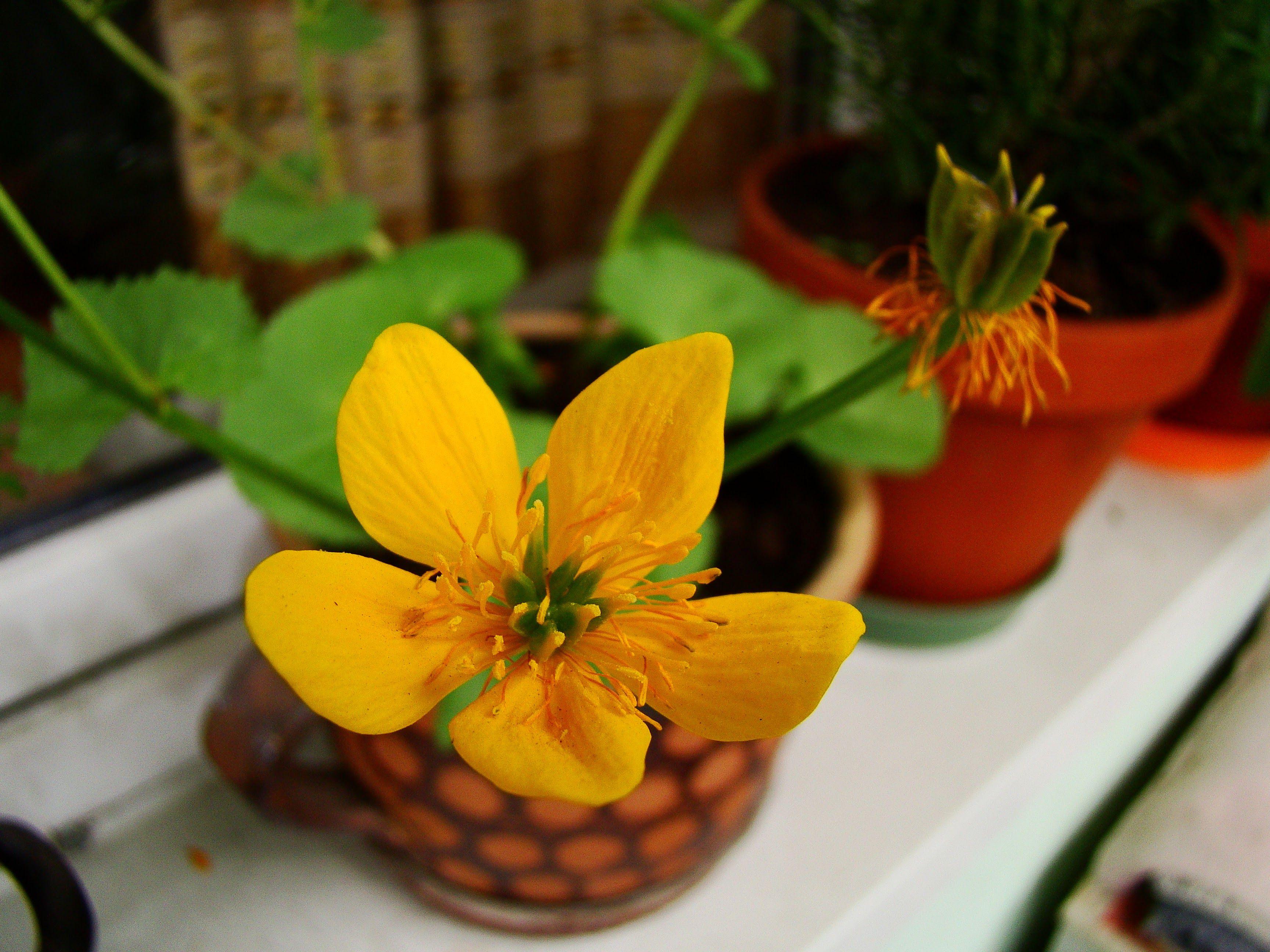 Pin On Garden Plants