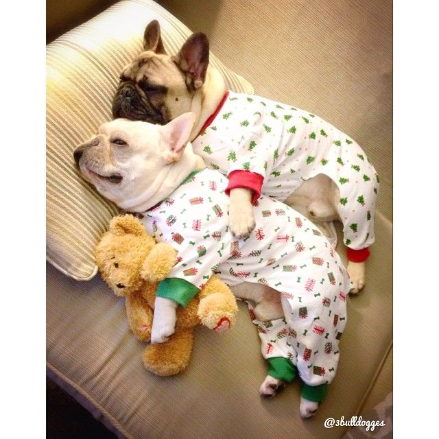 frenchies cuddling in pajamas