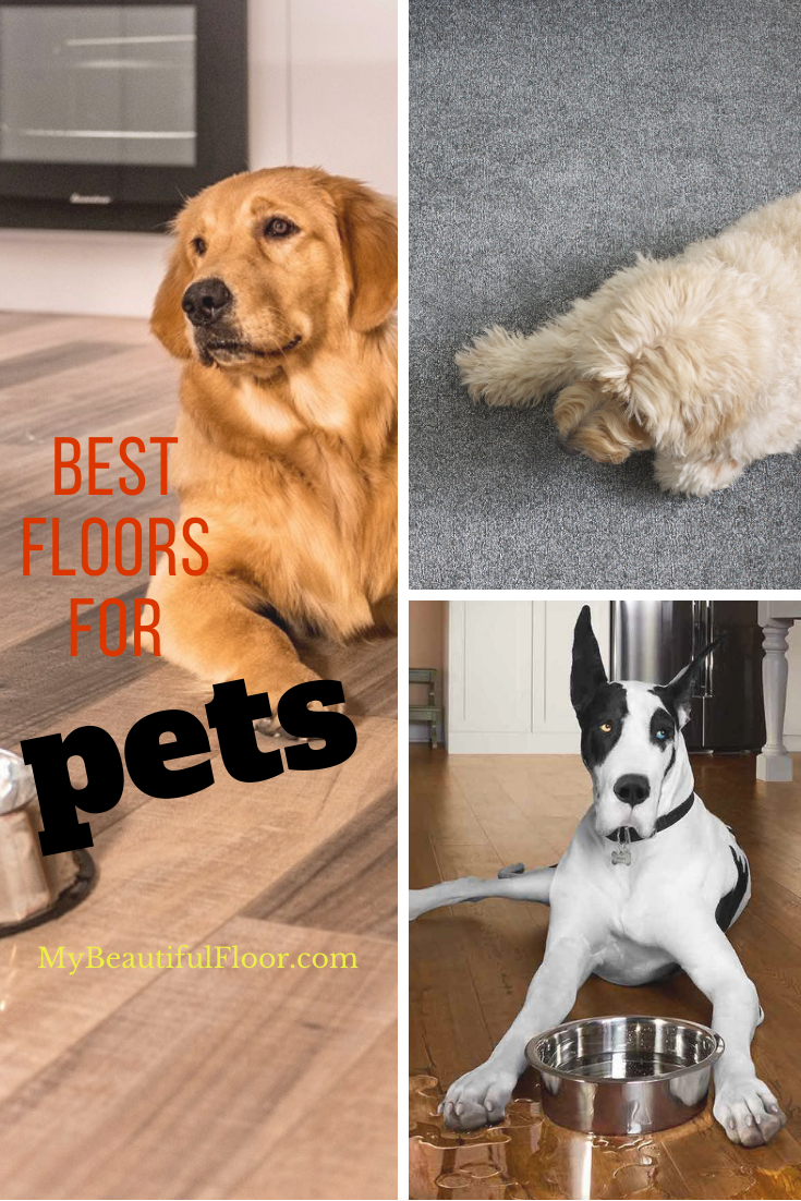 Best Hard Surface Floors for Pets flooroftheday