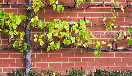 Espalier Fruit Trees Materials Strong Wire Plastic Coated