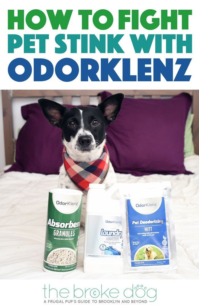 How To Fight Pet Stink With Odorklenz Pets Dog Friends Dog Grooming Supplies